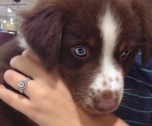 blue eyes, dog, and filhote image