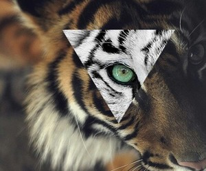 aw, tiger, and hipster image