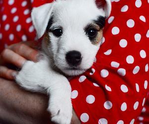 dog, marimekko, and puppy image