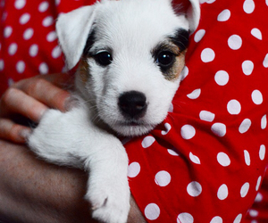 dog, marimekko, and puppy image