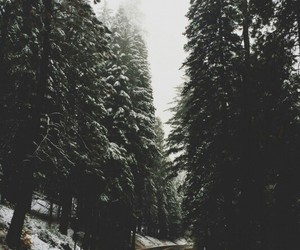 road, travel, and winter image