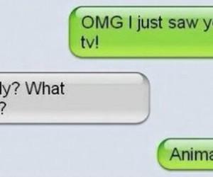 funny, lol, and animal image