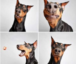 dog, cute, and doberman image