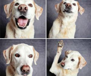 :3, dog, and lindo image