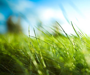 grass, green, and blue image