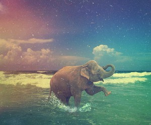 elephant and ocean image