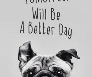 dog, tomorrow, and wallpaper image