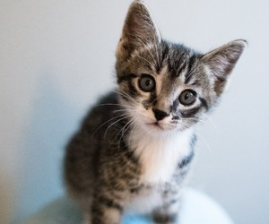 baby animals, cute animals, and cats image