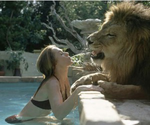 lion, animal, and pool image
