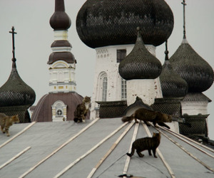 cat and roof image