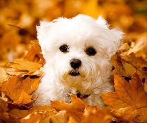 puppy, dog, and autumn image
