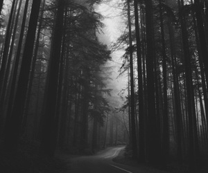 black, dark, and nature image