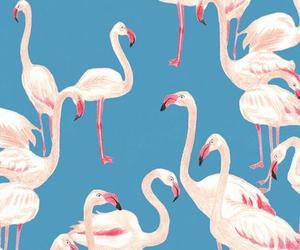 wallpaper, blue, and flamingo image