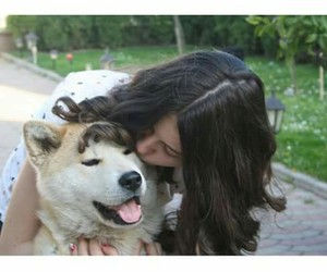 akita, dog, and lovely image