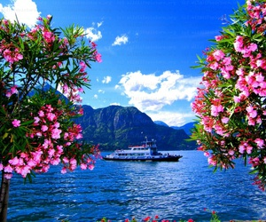 blue, boat, and flowers image