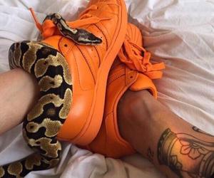 snake, orange, and adidas image
