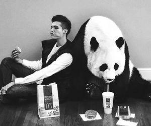 panda, bill kaulitz, and tokio hotel image