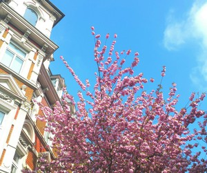 beautiful, blue sky, and cherry blossoms image