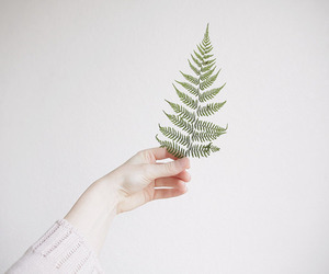 hand, leaves, and nature image