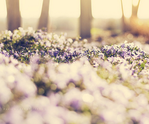 calm, flowers, and Sunny image