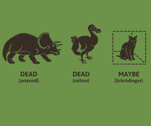cat, dinosaurs, and schrodinger image