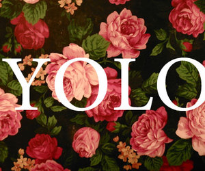 yolo, flowers, and rose image