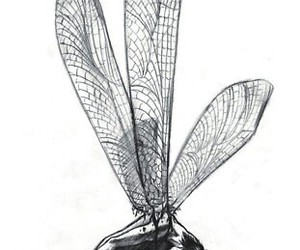 dragonfly, drawing, and man image