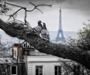 paris, eiffel tower, and pigeons image