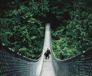 bridge, green, and photography image
