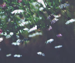 daisy, grunge, and hipster image