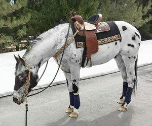 cheval, equitation, and horse image