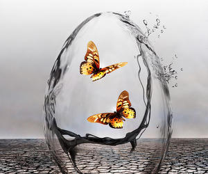 art, butterflies, and butterfly image