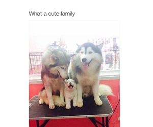 dog, cute, and family image