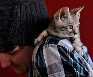 animals, boys, and cat image