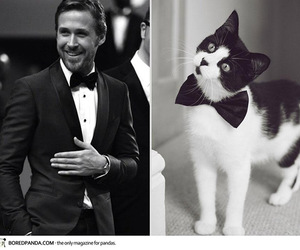 cat and ryan gosling image