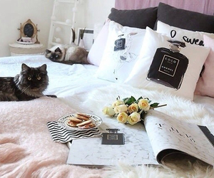 bed, cat, and chanel image