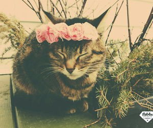 cats, flower, and tumblr cats image