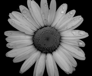 flower, black and white, and black image
