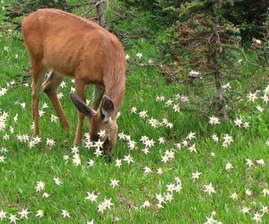 flowers, green, and animal image