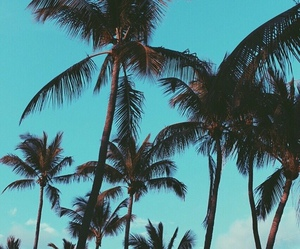 summer, blue, and palm trees image