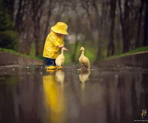 duck, cute, and baby image