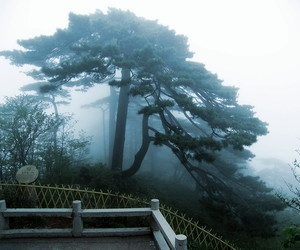 tree, pale, and fog image