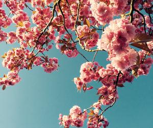 allstars, beach, and blossom image