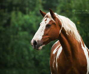 beautiful, equestrian, and beauty image