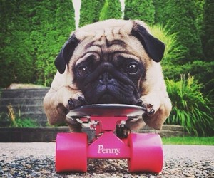penny, board, and dog image