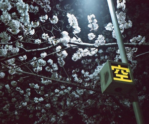 blossom, japan, and light image
