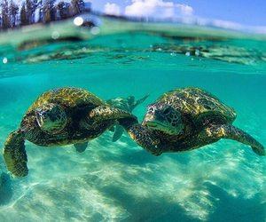 love, turtle, and animal image