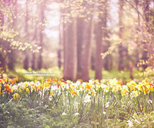 spring, flowers, and nature image