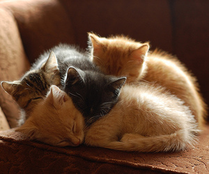 baby animals, kittens, and love image