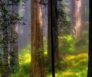 forest, landscape, and trees image